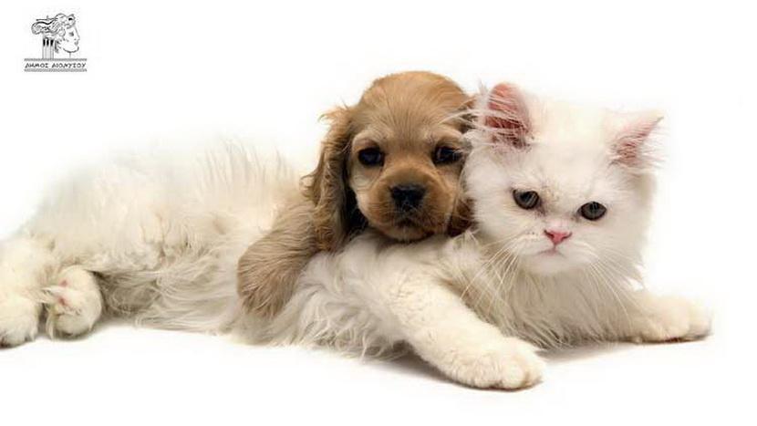 Παγκόσμια Ημέρα Αδέσποτων Ζώων εικόνα