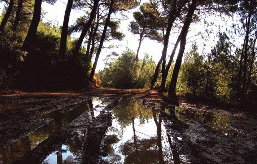 Παγκόσμια Ημέρα Περιβάλλοντος εικόνα
