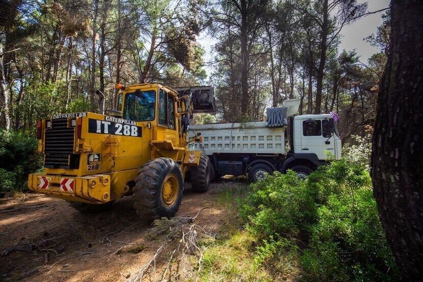 Προστασία των δασών Δήμου Κηφισιάς