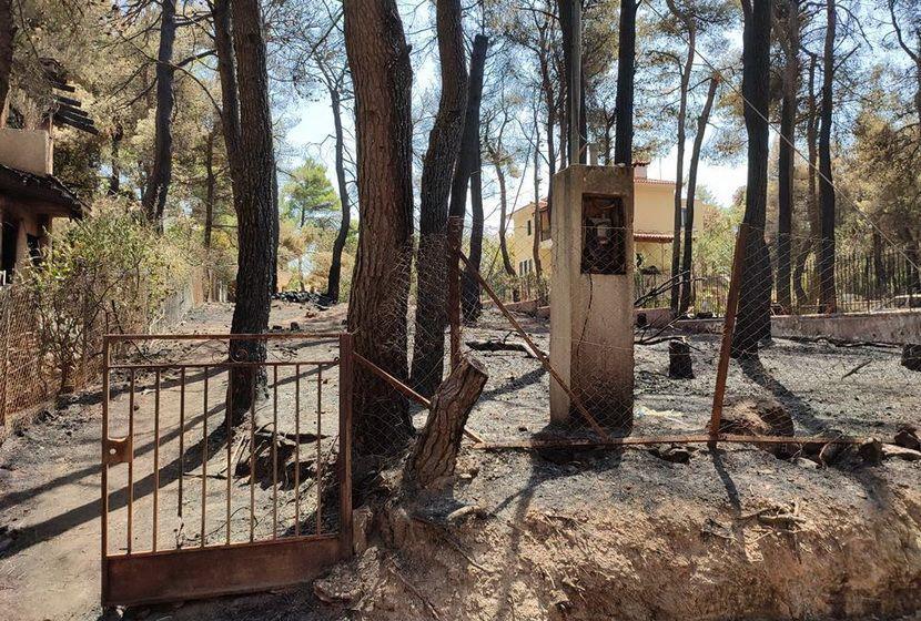 Αυτοψία πυρκαγιά Διόνυσος